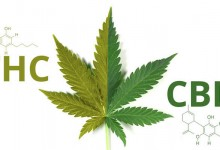 The Cannabusiness